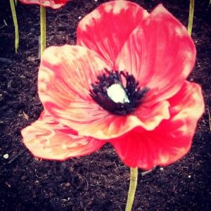 2015-11-11 poppy
