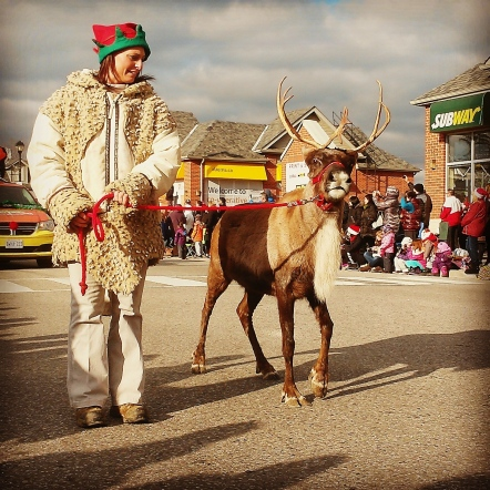 Reindeer were a hit as revelers lined Queen St. for the Mississauga Santa Claus Parade. Photo: Kelly Roche/QEW South Post