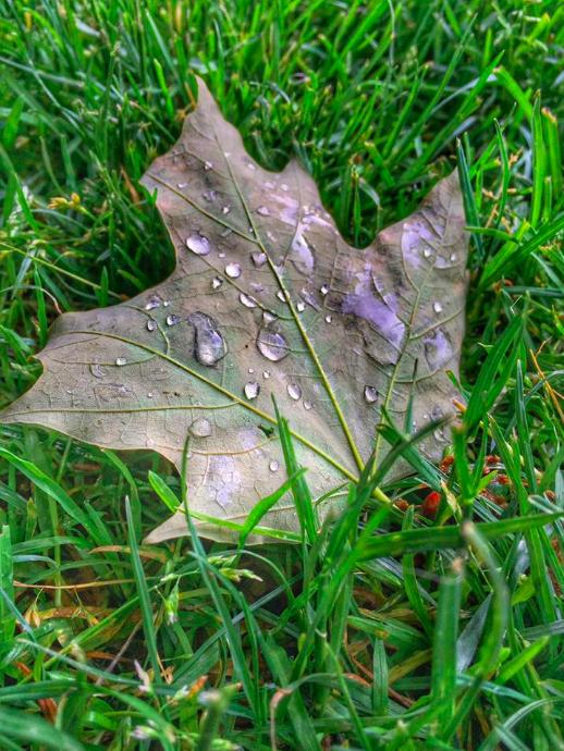 ELLEN NIGHTINGALE wet leaf